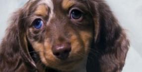 zwierzęta, miłość, psy, rodzina, rodzicielstwo, Dorota Sumińska