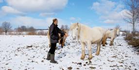 Holender polska wieś i konie