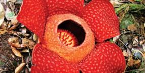 rośliny, Karol Darwin, grzyby, biologia