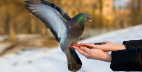 zwierzęta, zima, Dorota Sumińska, gołębie