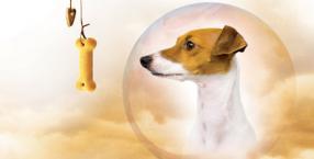 zwierzęta, pies, poszukiwania zaginionych, Krzysztof Jackowski, jasnowidz