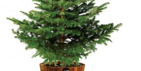 Boże Narodzenie, święta, choinka, ekologia, ekologiczna choinka, ekologiczne święta