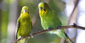 zwierzęta, Dorota Sumińska, papużki, zwierzęta w domu