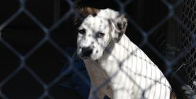 Przyjaciele, czyli pies w celi