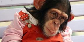 miłość do zwierząt, Dorota Sumińska, Małpa, małpy, małpie potomstwo, matka, zwierzę