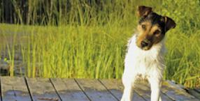 pies, Lew, horoskop, zodiak, kot, pupil, zwierzę, zodiak zwierzęcy
