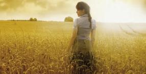 kłos, zboże, pole, sierpień, symbol, Matka Boska Zielna, język symboli