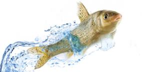 Jedz ryby, wygraj z grypą!