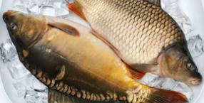 zwierzęta, Dorota Sumińska, karp, ryby, wigilia, świat zwierząt, akwarium