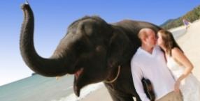 zwierzęta, Dorota Sumińska, podróż, Azja, zwierzę, orangutan, słonie, Sri lanka