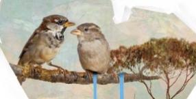 rodzina, ptaki, miłość, serce, Walentynki, pierniki, wróżba, 14 lutego, św. Walenty