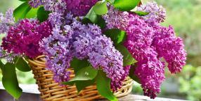 maj, Budda, kalendarz, jeleń, Flora, Duch Święty, zielone świątki