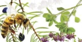 lato, lawenda, zioła, ziołolecznictwo, jałowiec, kozieradka, macierzanka, lipiec, zielicha, świetlik