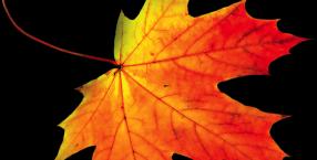 Liść, liście, jesień, wróżby, znaczenie, symbol, symbolika