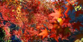 październik, jesień, święto, co robić jesienią
