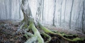 Ciemny las, głuchy las