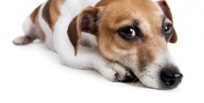 66 proc. psów, które straciło opiekuna, zachowywało się inaczej niż wtedy, gdy byli razem