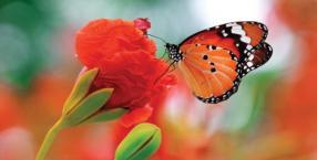 Język symboli: motyl
