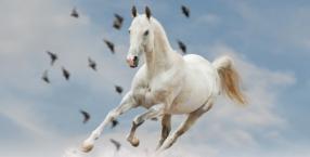 Ucz latać białego konia