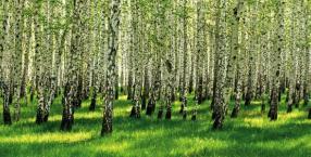 Drzewa na zdrowie!