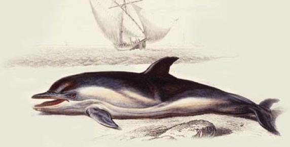 Przodkowie delfinów