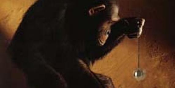 Ja szympans - Twój brat