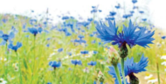 Sałatka z kwiatka
