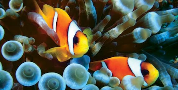 O czym mówią ryby?
