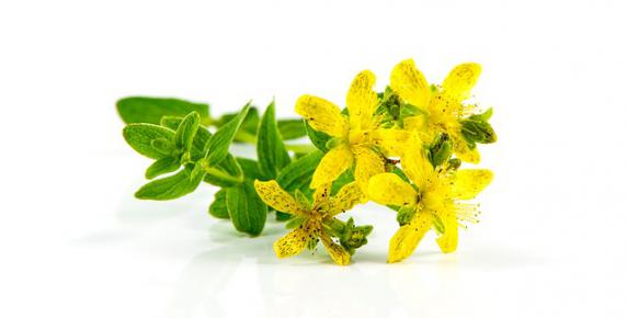 Czerwcowe zioła