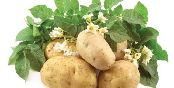 Leki z bożej apteki: ziemniak