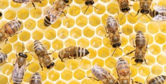 Sekrety pszczół